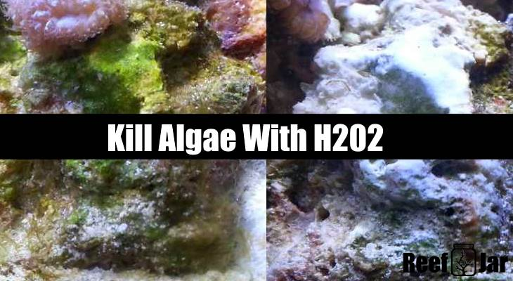 Kill Algae With Hydrogen Peroxide