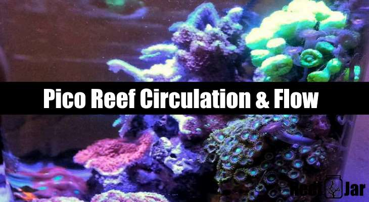 pico reef circulation and flow